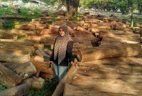 daerah penghasil kayu jati