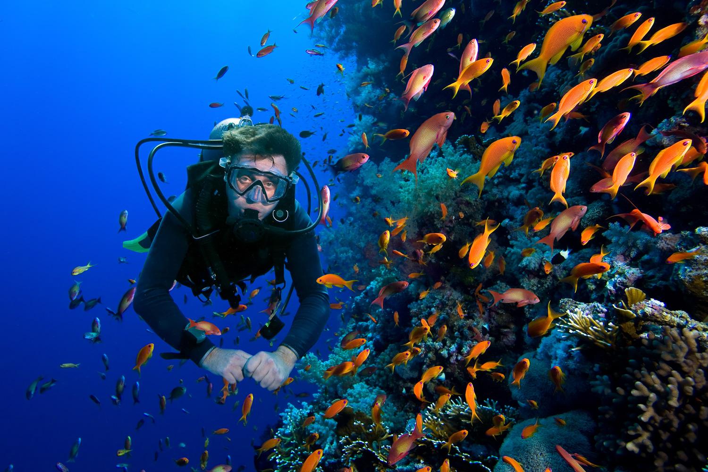 Syarat Dalam Melakukan Aktivitas Diving