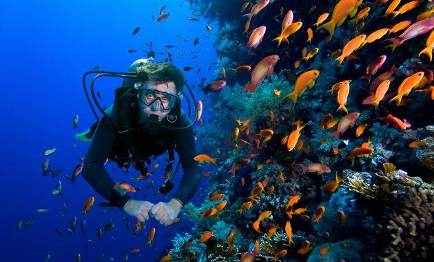 Scuba Diving Yuk di 6 Rekomendasi Lautan Indonesia Ini